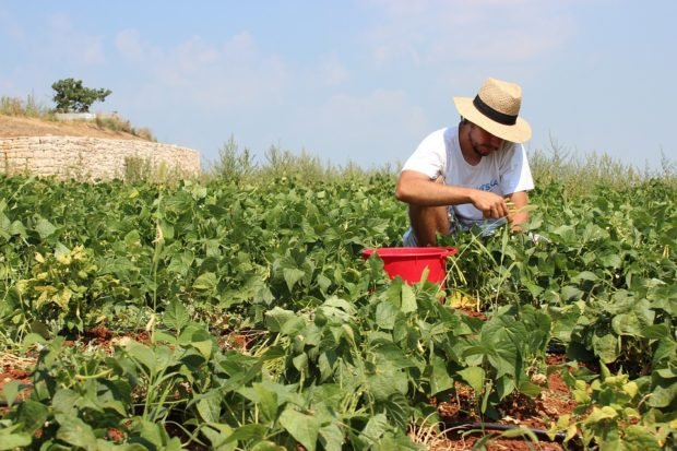Les quipements indispensables l entretien du jardin le bricomag for Recherche entretien jardin